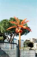35_orangepalm.jpg